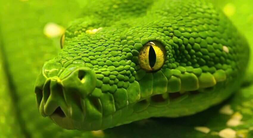 Musisz to przeczytać !Wierze że przypowieść o wężu zostanie z Tobą na zawsze.